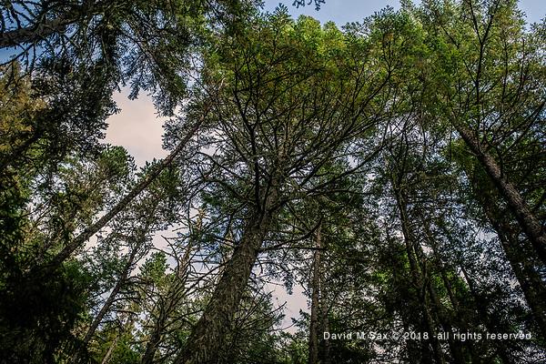 8.23.18 - Canopy... (DAVID M SAX)