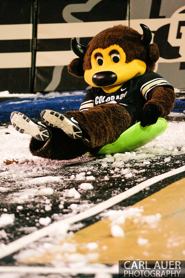 November 23rd, 2013:  The Colorado mascot Chip the Buffalo slides on some snow in the fourth quarter of the NCAA Football game between the University of Southern California Trojans and the University of Colorado Buffaloes at Folsom Field in Boulder, Colorado (Carl Auer/ZUMAPRESS.com)