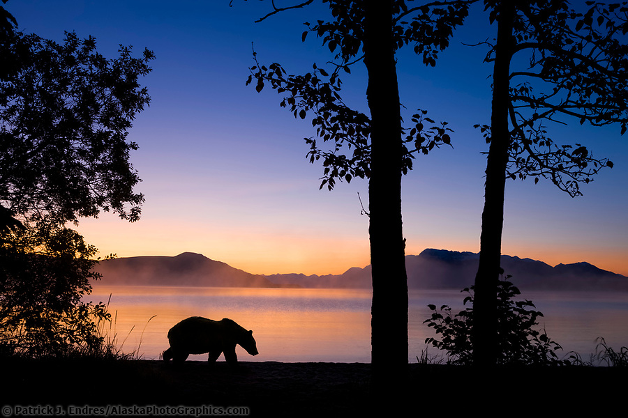 DIGITAL COMPOSITE: Brown bear walks along the shores of Naknek lake at dawn, Kejulik mountains, Katmai National Park, Alaska. (Patrick J. Endres / AlaskaPhotoGraphics.com)