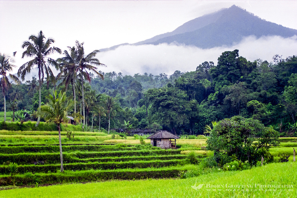 Bali, Tabanan, Jatiluwih. At 700m altitude, with beatiful terraced paddy fields. (Photo Bjorn Grotting)