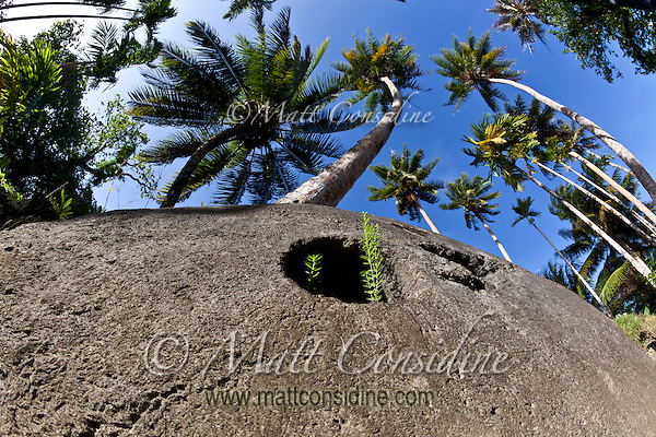 Looking up at some Yap stone money and the coconut palms against a bright blue sky, Yap Micronesia. (Photo by Matt Considine Travel Photographer)