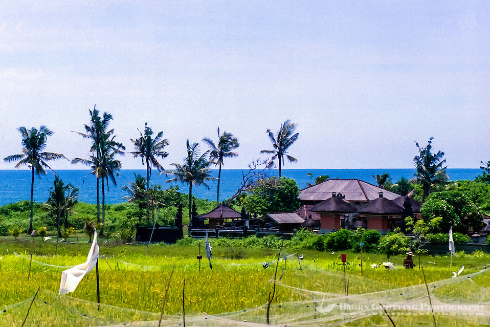 Bali, Badung, Canggu. Blue sky and sea and golden rice fields. (Photo Bjorn Grotting)