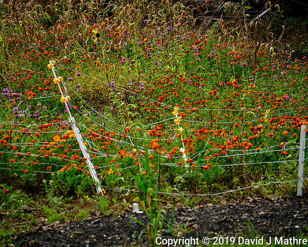 Southwest Wildflower Meadow Fence. Image taken with a Fuji X-T2 camera and 100-400 mm OIS lens (David J Mathre)