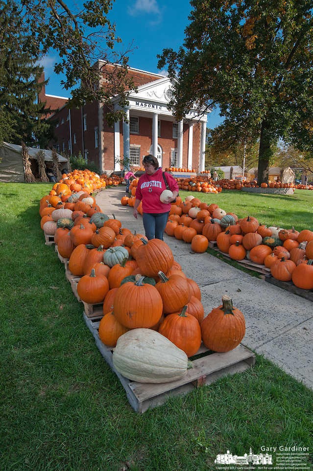 A woman searches for the best pumpkins among the hundreds displayed for sale in the front yard of the Masonic Temple in Westerville, OH. The pumpkins are a fund raiser for Boy Scout Troop 560. (Gary Gardiner/SmallTown Stock)