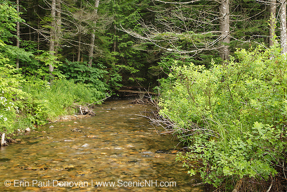 Birch Island Brook in Lincoln, New Hampshire USA near Ice Pond.