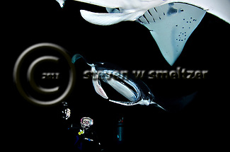 Manta Ray and Diver, Manta birostris,  (Walbaum, 1792), Kona Hawaii (Steven W Smeltzer)