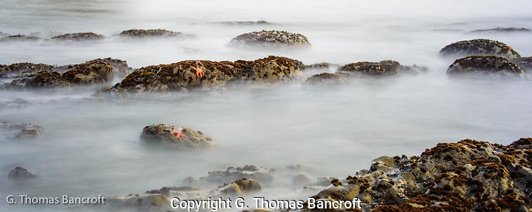 A few ochr sea stars clung to rocks at low tide as the waves came in and out.  I used a slow shutter speed to create a ghostly feeling to the scene.  I sat and watched the waves for a long time, relaxing more with each passing wave before I moved along the shoreline. (G. Thomas Bancroft)
