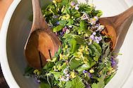 Kräuter - bzw. Wildgemüse - Salat, Kräutersalat im Frühjahr, als Zutaten Gänseblümchen, Löwenzahn, Taubnessel, Gundermann u.a.m. (Frank Hecker)
