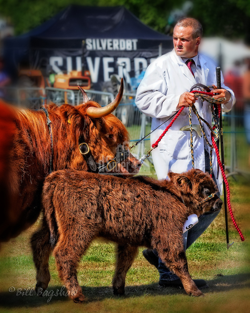 Highland cattle at Banchory show dsider.co.uk online magazine, photo courses (Bill Bagshaw & Martin Williams/Bill Bagshaw, dsider.co.uk)