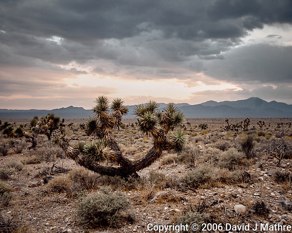 Nevada desert somewhere near Area 51. Image taken with a Nikon D200 camera and 18-70 mm kit lens. (David J Mathre)