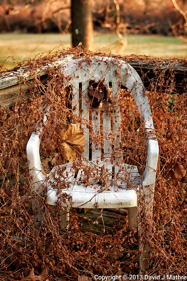 """Lonely white-plastic chair over run with dead """"Mile-a-Minute"""" vines. Late Autumn Backyard Nature in New Jersey. Image taken with a Nikon Df camera and 58 mm f/1.4G lens (ISO 100, 58 mm, f/8, 1/60 sec) (David J Mathre)"""