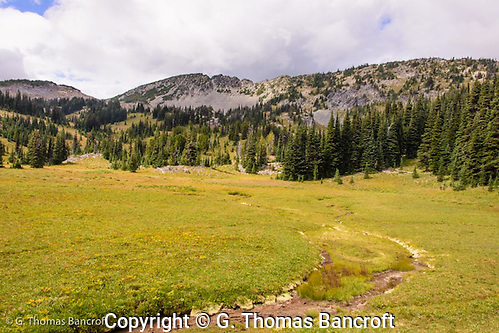 Fall colors had begun in Sunrise Meadow. The trail along Sourdough Ridge is visible in the background. (G. Thomas Bancroft)