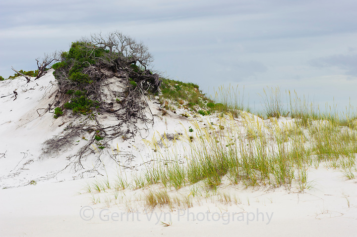 Large dune. Gulf Islands National Seashore, Florida. June. (Gerrit Vyn)