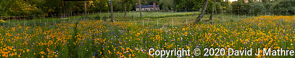 Wildflower Meadow. Composite images taken with a Leica CL camera and 35 mm f/1.4 lens (ISO 400, 35 mm, f/8, 1/80 sec). (DAVID J MATHRE)
