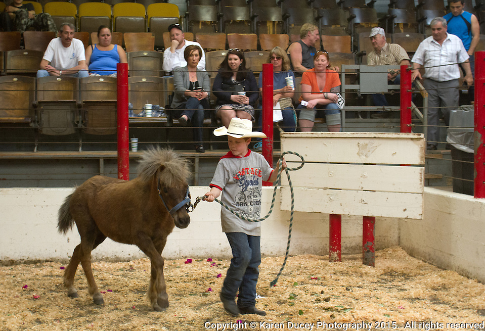 Blake Neuman, 10, from Enumclaw, Wash. walks a pony named Ray into the auction ring in front of Ray's rescuers at the Enumclaw Sale Pavilion in Enumclaw, Wash. on May 9, 2015. (photo © Karen Ducey Photography) (Karen Ducey/Karen Ducey Photography)