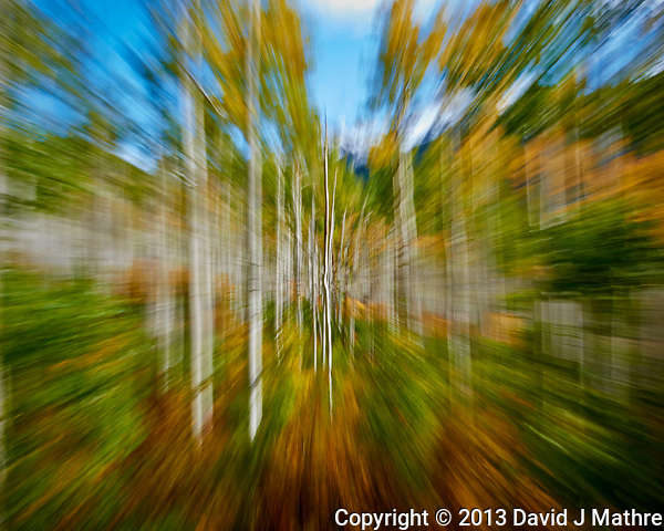 Zooming Through an Autumn Aspen Forest in Colorado. Gone to See America 2013. Image taken with a Nikon 1 V2 camera and 6.7-13 mm VR lens (ISO 160, 13 to 6.7 mm, f/16, 1/8 sec). (David J Mathre)