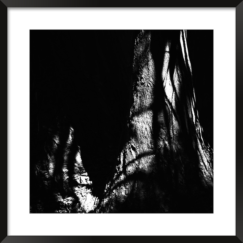 Light and shadows on a tree trunk. Fine art black&white image. (Rosa Frei)