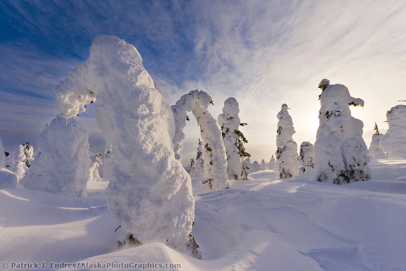 Spruce trees under snow load after a full winter, severe, blowing snow and moisture pack heavy loads of snow in this sparse taiga environment. Interior, Alaska. (Patrick J. Endres / AlaskaPhotoGraphics.com)
