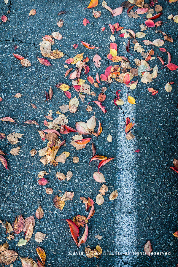 10.11.18 - Leaves Parked.... (© David M Sax 2018 - all rights reserved)
