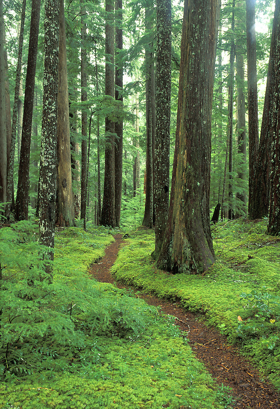 Trail through old growth forest, Downey Creek Trail, Cascade Mountains, Washington (Brad Mitchell/Brad Mitchell Photography)
