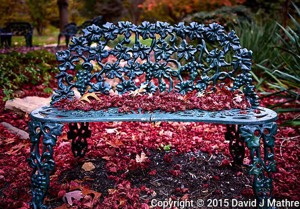 Red malple leaves on a bench. Backyard autumn nature. Image taken with a Leica T camera and 23 mm f/2 lens (ISO 100, 23 mm, f/2, 1/60 sec) (David J Mathre)