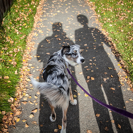 Molly heads to the Delaney Park Strip on a wonderfully warm fall day with Mitzi and Clark (Clark James Mishler)