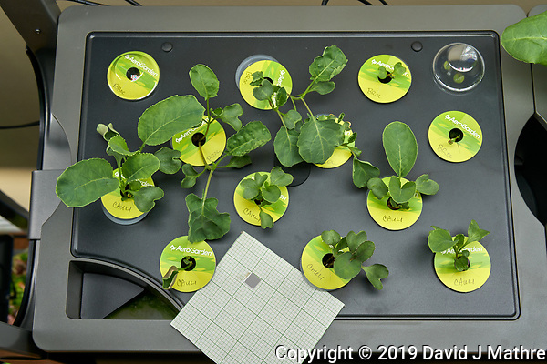 Farm 09 Left (14 days). Positions F09L01 - F09L06 Broccoli (Botanical Interests); Positions F09L07 - F09L12 Cauliflower (Botanical Interests). Image taken with a Leica TL-2 camera and 35 mm f/1.4 lens (ISO 320, 35 mm, f/8, 1/80 sec). (DAVID J MATHRE)