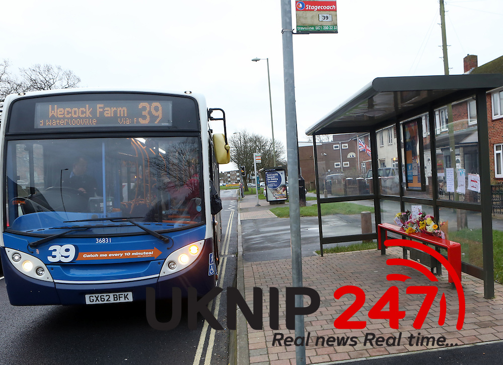 Portsmouth,Havant ,Hampshire Wednesday 3rd Feburary 2016 Tribute to Missy the cat as Leigh Park bus set to be named after her MISSY the Bus Stop Cat is to be remembered forever – after a bus company agreed to name a vehicle after her. The friendly 12-year-old pet was well-known across Leigh Park for waiting at the 39 bus stop in Dunsbury Way to greet commuters. But she had to be put down last week after suffering horrific injuries which are believed to have been the result of being hit by a car. More than £3,000 has been raised in her memory for local animal charities after bus drivers at Stagecoach set up a fundraising page for her. And now the company has gone a step further by agreeing to name one of its number 39 buses after her, and paint it with a picture of the ginger and white moggy. Bob Jackson, operations manager at Stagecoach, said: 'Like many others, we were shocked and very saddened to hear what happened to Missy and our thoughts are with her owners. She was a friendly cat who was known to many of our bus drivers and customers as she was often found at the bus stop, and even attempted to board the bus on a few occasions Stagecoach operations manager Bob Jackson 'She was a friendly cat who was known to many of our bus drivers and customers as she was often found at the bus stop, and even attempted to board the bus on a few occasions. 'We felt that naming a route 39 bus after Missy would be fitting tribute, and an excellent suggestion by our driver Craig Cockram.' Mr Cockram said: 'We initially wanted to set up the fund to get a plaque for Missy in the shelter. 'The total has gone way beyond our expectations and any money left over will be donated to a local charity, selected by Missy's owners.' There was an outpouring of grief following Missy's sad death with schools in Leigh Park breaking the news to pupils in special assemblies. A shrine of flowers and cards has been created at the Dunsbury Road bus stop, opp (UK News In Pictures/UKNIP)