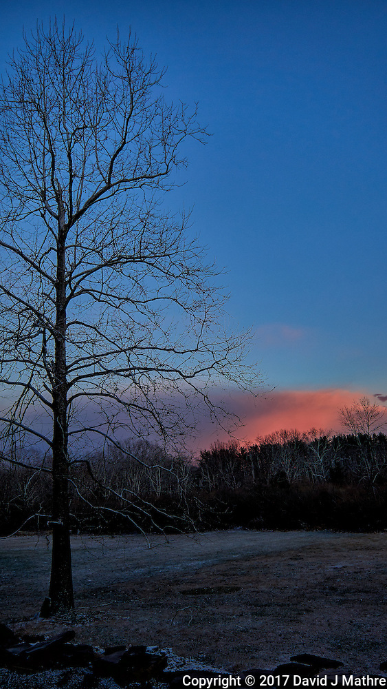 Backyard tree at sunset. Winter Nature in New Jersey. Image taken with a Leica T camera and 18-56 mm lens (ISO 100, 18 mm, f/3.5, 1/200 sec) (David J Mathre)
