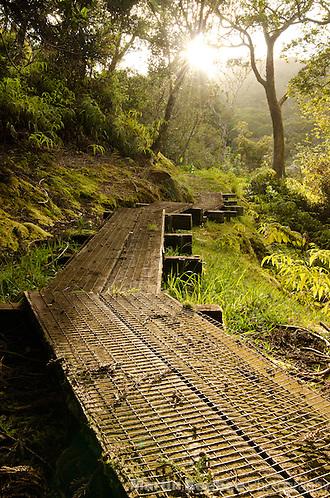 Kawaikoi Stream Trail, Na Pali-Kona Forest Reserve, Kauai, Hawaii (Martin Beebee Photography)