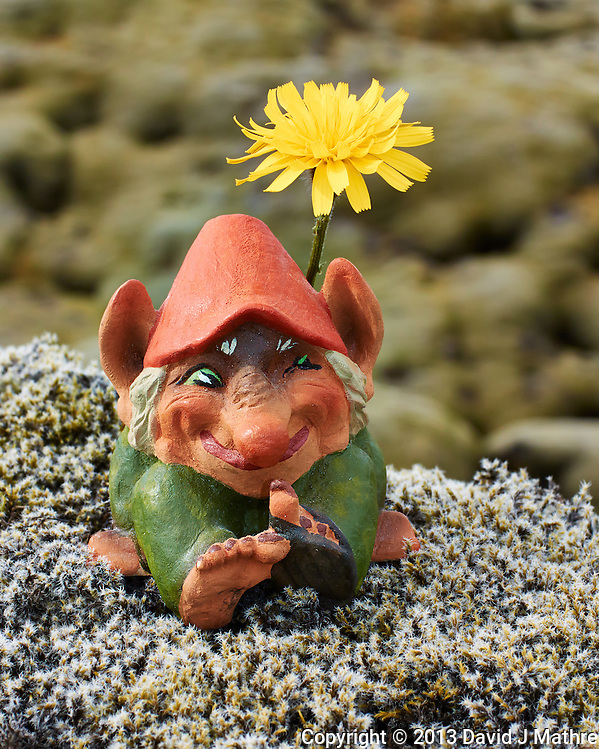Troll Sunning Itself Under A Dandelion On the Lichen and Moss Covered Eldhraun Lava Field in Southern Iceland. Image taken with a Nikon 1 V2 camera and 32 mm f/1.2 lens (ISO 160, 32 mm, f/8, 1/250 sec). (David J Mathre)
