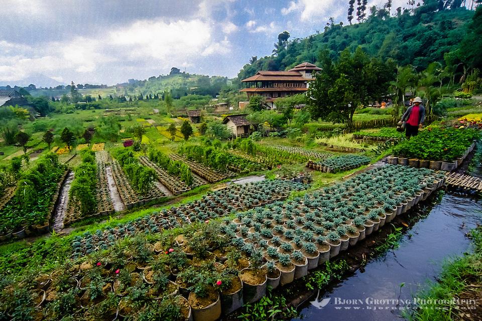 Indonesia, Java, Bandung. Wisata Bunga, the flower road above Bandung. (Photo Bjorn Grotting)