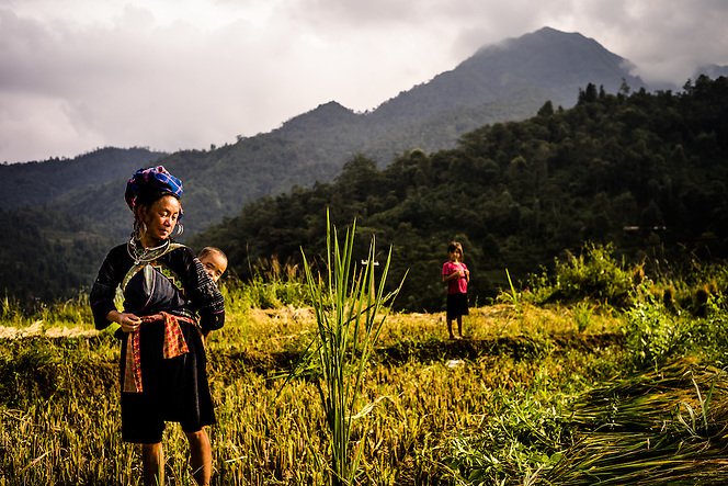 An ethnic minority woman with baby in tow, takes a brief rest while harvesting rice near Sapa, northern Vietnam. (Quinn Ryan Mattingly)