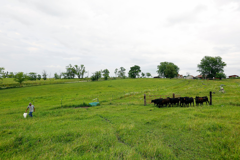 "Farmer Phrakhounmany ""Air"" Philavanh leads his cattle through pasture on his farm near Milo.  A Laotian immigrant, Philavanh remembers his grandfather's farm in Laos and has always wanted to farm in America.  He is raising cattle and plans to raise duck, a popular food among the Laotian people. (Christopher Gannon/The Register)"