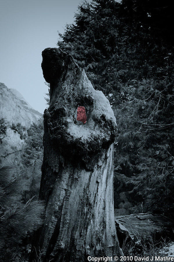 "Nikonians ""Yosemite in Winter""2010  Workshop. (David J Mathre)"