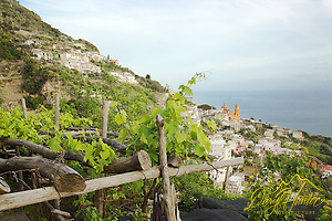 Grape Arbor, Amalfi Coast, every inch of dirt is used in the ancient land