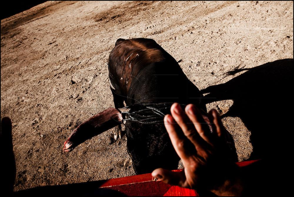 Corrida de touros e património etnográfico, Capeia arraiana originária das aldeias da raia. Capeia arraiana na aldeia da Rebolosa concelho do Sabugal Bruno Simões Castanheira (4SEE Photographers)