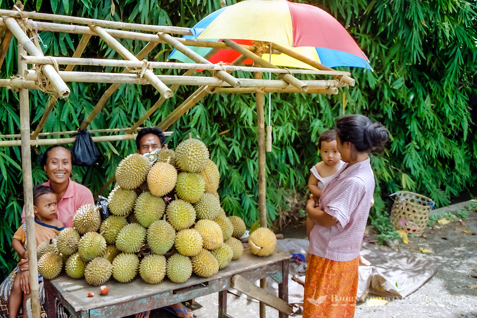 Bali, Buleleng, Singaraja. A family selling durian south of Singaraja. The taste of this characteristic fruit is definitely better than its smell. (Bjorn Grotting)