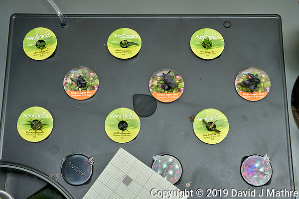AeroGarden Farm 02 Left Tray at 28 days. L01-L03 Mini Jalapeno Peppers; L04-L06 Purple Super Hot Pepper; L07-L09 Red Fire Pepper Image taken with a Leica TL-2 camera and 35 mm f/1.4 lens (ISO 640, 35 mm, f/16, 1/25 sec). (DAVID J MATHRE)