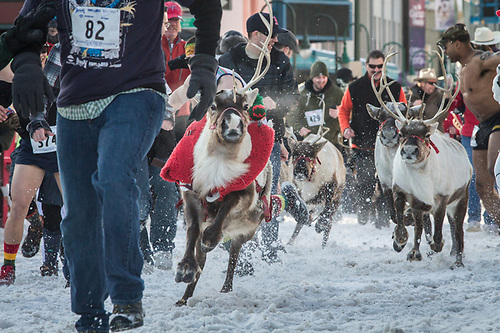 "Rondy ""Running of the Reindeer"", 2013, Fourth Avenue, Anchorage, Alaska (Clark James Mishler)"