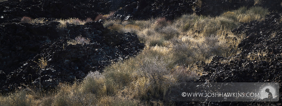Ancient lava field with grasses in it.  Snow Canyon State Park in Utah outside St. George. (Josh Hawkins)