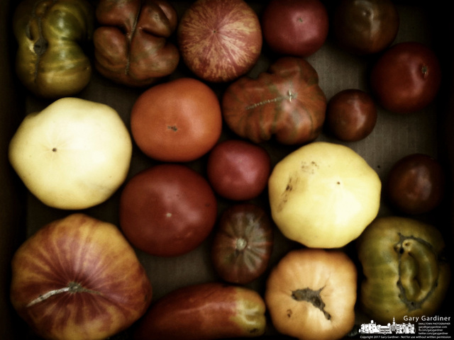 Heirloom red and green tomatoes for sale at a farmers market (Gary Gardiner/SmallTown Stock)