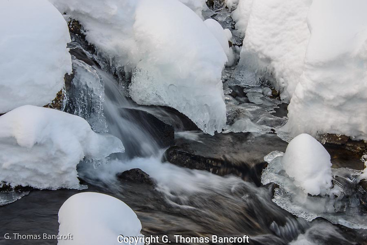 Ice forms along the edge of the rapids in Bagley Creek. (G. Thomas Bancroft)