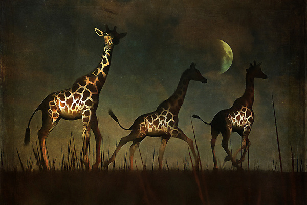 Three giraffes fleeing in the dead of night. A powerful, perhaps ominous moon hangs over their fearful heads. Where are they going? What are they afraid of? There is a sense of urgency this piece that reaches into our hearts from the first moment in which we lay eyes upon it. This is a piece that can prove to be a beautiful addition to not only homes, but to a place of business, as well. The landscape, giraffes, and moon serve to create something powerful. Available across numerous lovely prints, or as an interior décor product for the home. (Jan Keteleer)
