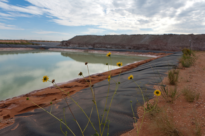 Sunflowers grow alongside a saltwater evaporation pond at The Waste Isolation Pilot Plant in Eddy County. WIPP received $172 million as part of the Recovery and Reinvestment Act. The saltwater pond is used to capture runoff as part of the mining process. A new pond was built adjacent to this using recovery funds. (Steven St. John)
