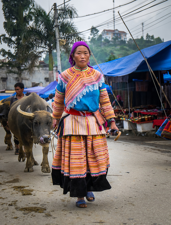 BAC HA, VIETNAM - CIRCA SEPTEMBER 2014:  Hmong woman driving buffalo at the  Bac Ha sunday market, the biggest minority people market in Northern Vietnam (Daniel Korzeniewski)