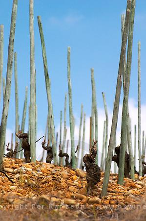 Old vines on stony pebbly soil