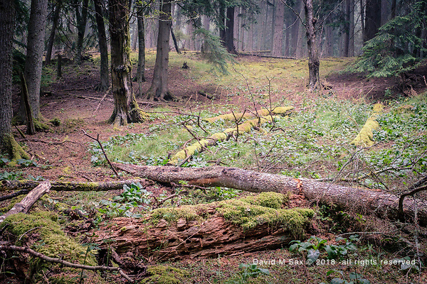 8.25.18 - Forest Floor... (DAVID M SAX)