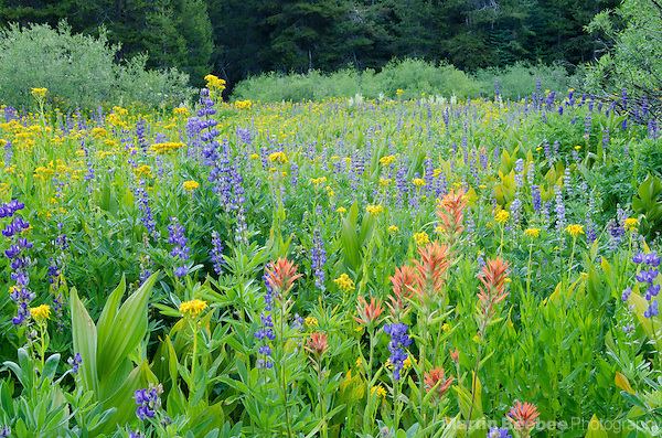 Alpine meadow filled with summer wildflowers, Eldorado National Forest, California (Martin D. Beebee)
