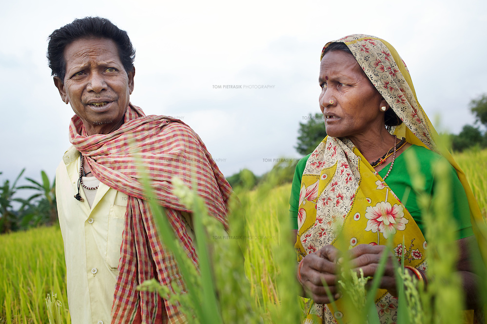 Amar Singh Patel and his wife, Sona Bai on their plot of SRI cultivated rice, two weeks before harvest. ..Amar Singh Patel, age 60 owns owns 5 acres of land, 1.5 of which is irrigated. He lives in Rathkhandi village, Bilaspur District, Chhattisgarh State with his wife Sona Bai, their daughter and son-in-law and four grandchildren...On this irrigated land, Amar Singh's family cultivate rice using the SRI technique together with a small vegetable plot. The remaining 3.5 acres are leased out to share-croppers. Amar Singh was introduced to SRI by Oxfam partners Jan Swasthya Sahyog (JSS) and began growing rice using this technique in 2007...Amar Singh's land did not always produce enough food for his family to eat. When Amar Singh was a young man, he and his family had to eat wild flowers to survive. They also had to sell their cattle, buy clothing on credit and migrate in search of work...The JSS introduced SRI to Amar Singh and others in his village. SRI is an organic system of intensively growing rice that can double crop yields double. ..Using SRI, Amar Singh and his family produce enough rice for all of their annual needs from only 1.5 acres of land. They now never go hungry...By using SRI Amar Singh never has to spend money on expensive chemicals which degrade the soil. SRI also uses less seed. With fewer inputs Amar Singh has made savings and invested these in his farm. Last year he purchased a new bullock cart. And Amar Singh's grandchildren no longer have to work the land when they should be at school as he did when he was a child. ..The JSS have recruited Amar Singh to advocate for SRI and teach other farmers the benefits of this system of agriculture. ..Photo: Tom Pietrasik.Chhattisgarh, India.November 2012 (Tom Pietrasik)